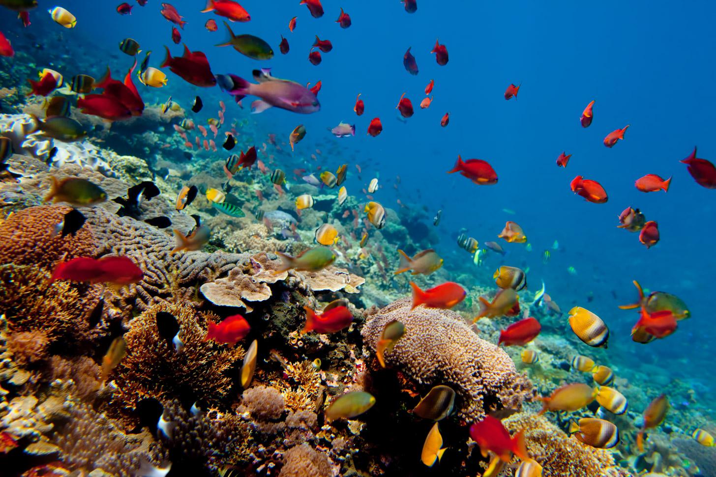 Duiken rond Bali